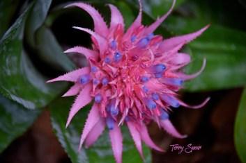 pink and purple flower 1000 Minnesota 3017