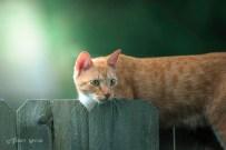 tabby cat watching birds on feeder 800 016