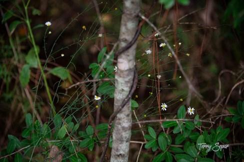 tiny daisy wildflowers 1000 035