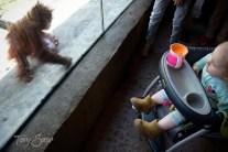 Baby and orangutan baby 1000