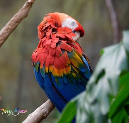 parrot 1000 101