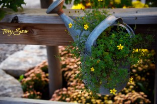 picture of flowers on a fence 1000 1036