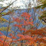 ローカルな情報は地元の人に聞くのが1番ですね!松本~高山、白川郷の旅