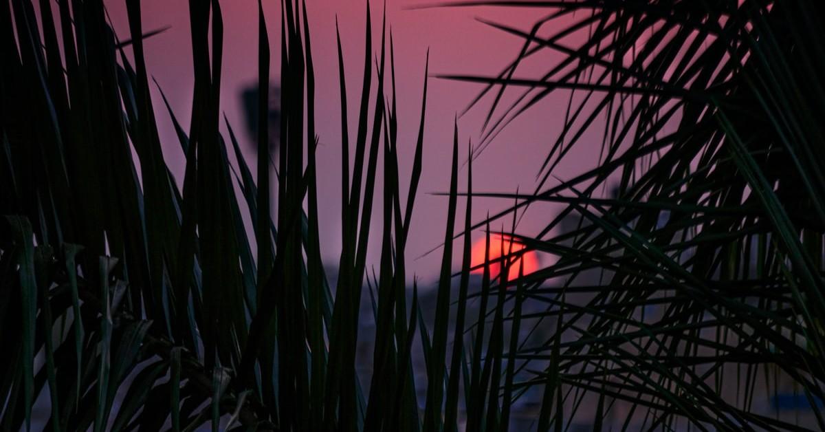 Sunset seen through tall grass