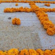 fiore-per-altar-de-muertos