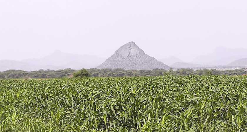 Agro-industrial farming in Gash-Barka regions of Eritrea
