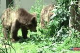 Italia shpëton tre arinj shqiptarë