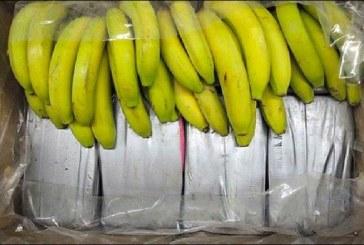 Banane & kokainë: detaje nga operacioni i kapjes së 2 ton drogë shqiptarësh në Gjermani