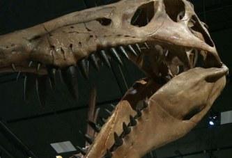 Shkencëtarët: Edhe dinosaurët vuajtën nga kanceri