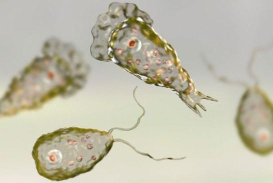 """SHBA, përpjekje për të parandaluar një katastrofë: në çesma, ameba që """"ha"""" trurin"""