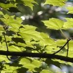 EcoTimber Tesoro Woods Environmental Attribute Guide