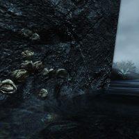 Nordic barnacles