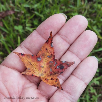 Sweetgum - Autumn 2015