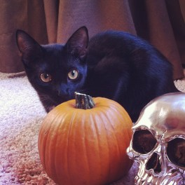 Halloween wouldn't be complete without a Black Cat