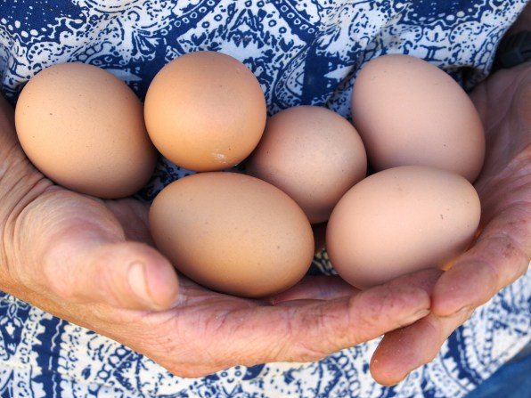 Backyard chickens are part of the urban farming revolution.