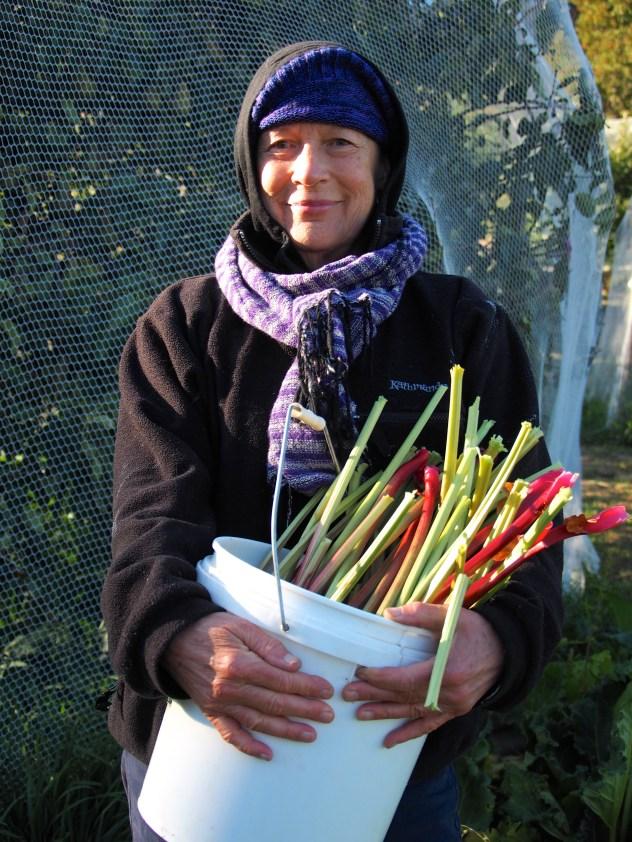 Helen harvests the rhubarb.
