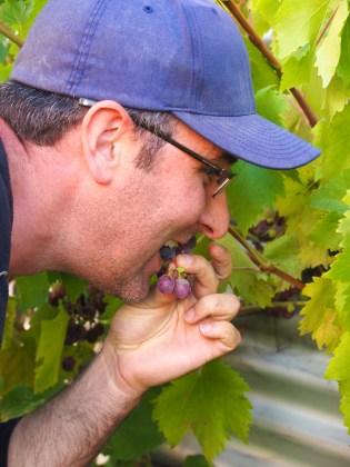 Julian taste testing the grapes.