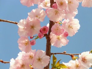 5 Simple Magical Activities for Spring by Tess Whitehurst