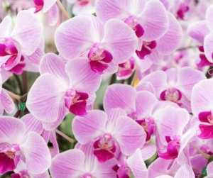 Love Magic Spells Rituals Orchid