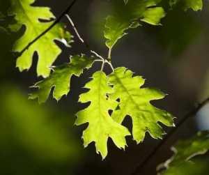Wealth Prosperity Abundance Herbs Magick