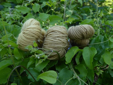 3 skeins of yarn naturally dyed with Old Man's beard pictured in a hedge of Old Man's Beard.