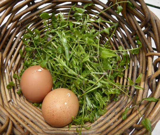 A picture of a basket containing clematis shoots and 2 eggs