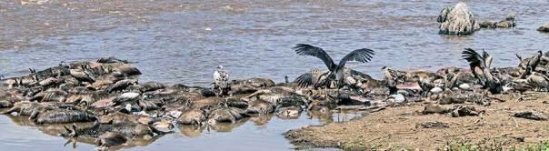 Fotoreise_Foto-Safari_Kenia_Masai_Mara_DSC2209