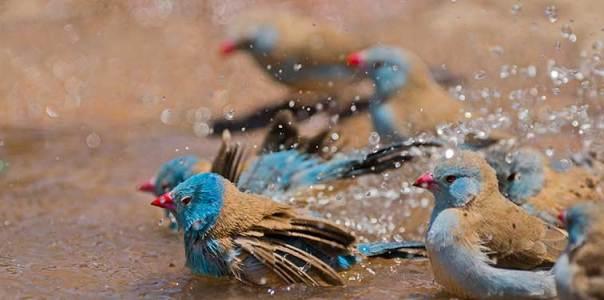 Fotoreise_Fotosafari_Tansania_Afrika_033