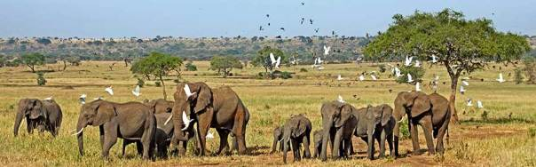 Benny-Rebel-Fotoreise_Fotosafari-Tansania-Ruanda-Afrika_A26