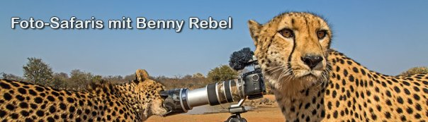 Benny-Rebel-Fotoworkshop-Fotoreise-Fotosafari-Geparde
