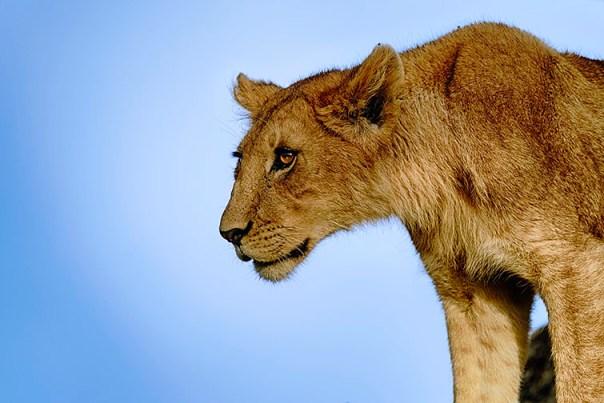 Fotoreise_Fotosafari_Afrika_Tansania_Benny_Rebel_DSC0207