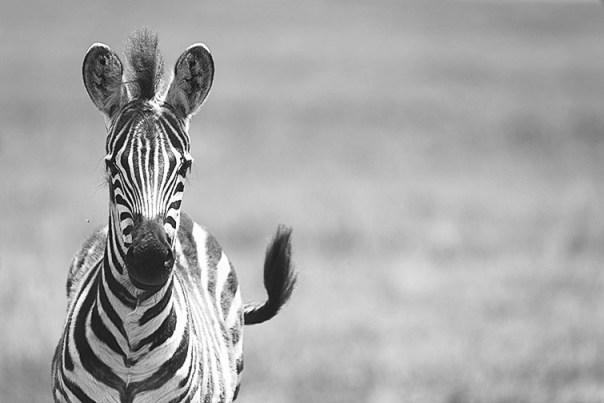 Fotoreise_Fotosafari_Afrika_Tansania_Benny_Rebel_DSC3075