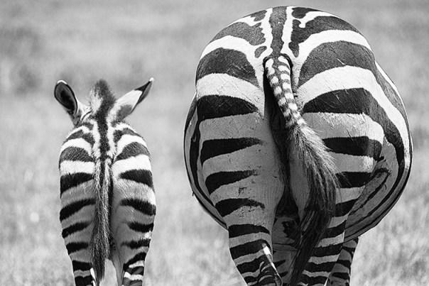 Fotoreise_Fotosafari_Afrika_Tansania_Benny_Rebel_DSC3172