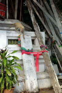 Un chat qui se balade à Wat Pho
