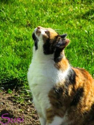 Frühling Katze