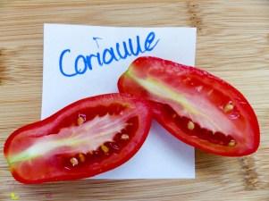Tomatensorten Corianne