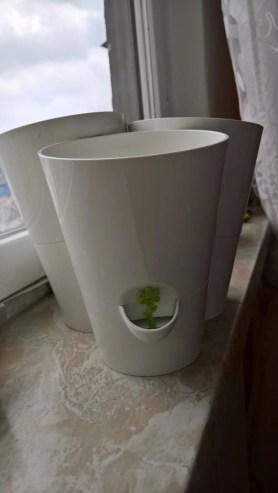 Mini Kräutergarten [Kräutertopf von Emsa (5 von 5)] im Produkttest
