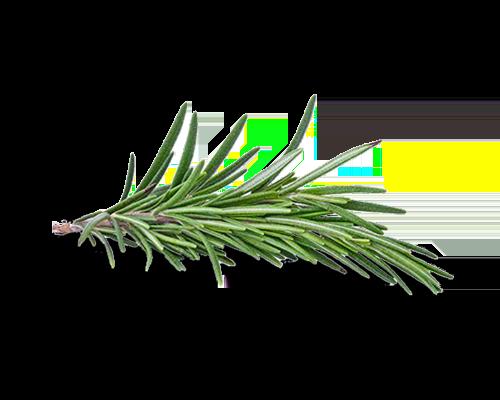 rosemary testo herb