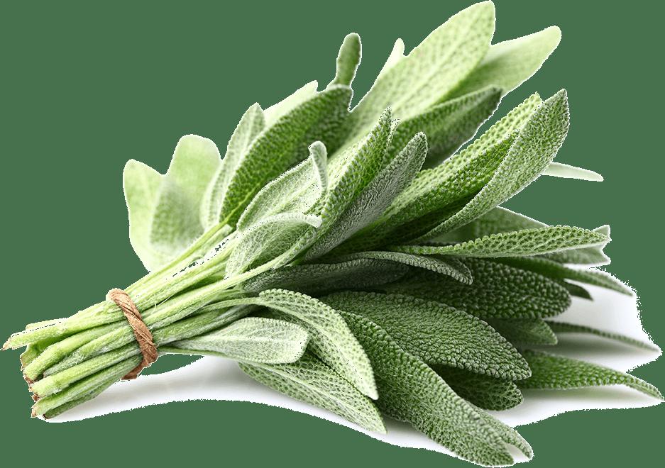 sage testosterone Boosting herb