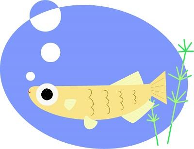 メダカの餌は留守中どうする?餌より水質が心配?水槽の大きさは?