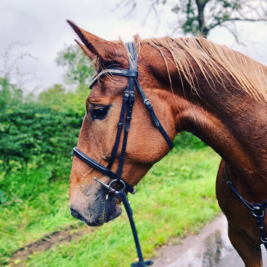 Eden Valley horse vet