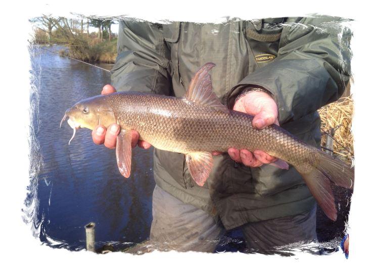 Barbel tetley angling