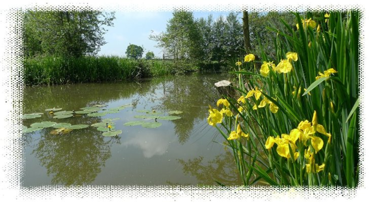 Tetley Angling Summer