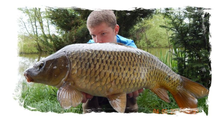 Bars Of Gold Carp