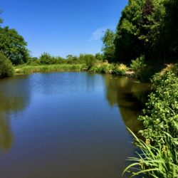Tetley Angling Silver Birch Fisheries