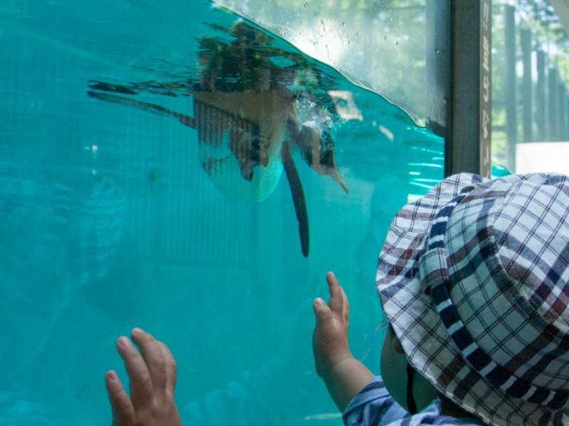 川崎市夢見ヶ崎動物公園 色んな動物がいるのに無料で最高だった