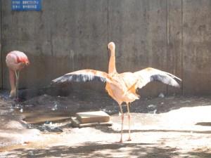 yumemigasaki-zoo-6.jpg