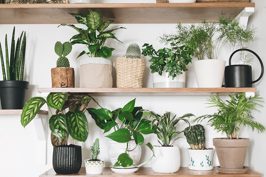 Why You Should Have House Plants