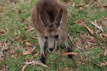 Australia_deLUX-1805