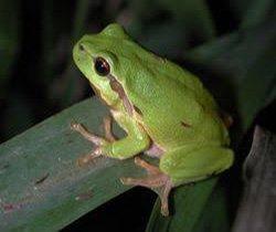 Anfibios y reptiles en la Sierra Oeste #8